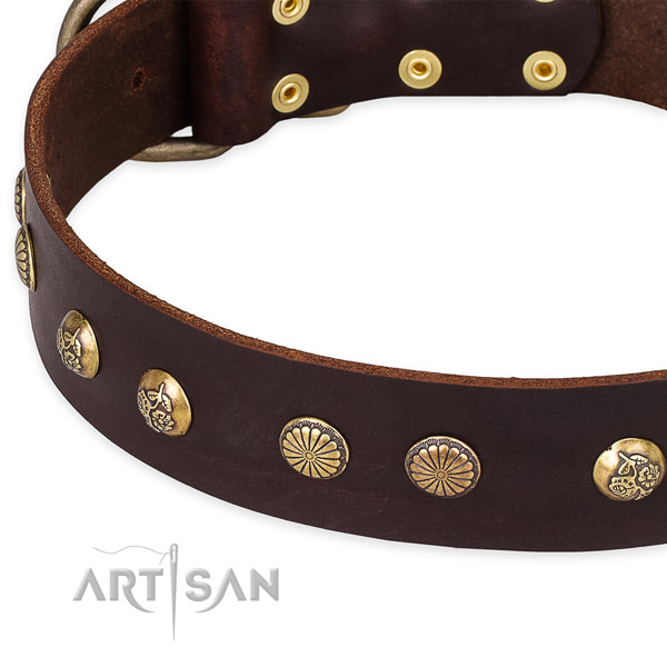 Genuine leather collar with durable hardware for your stylish canine