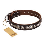 """Step and Sparkle"" FDT Artisan Glamorous Studded Brown Leather Belgian Malinois Collar"