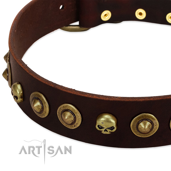 Remarkable studs on leather collar for your pet