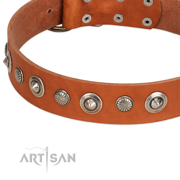 Unusual studded dog collar of top notch natural leather
