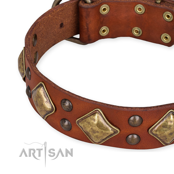 Full grain genuine leather collar with strong fittings for your handsome canine