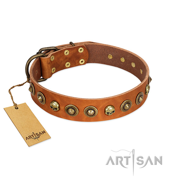 Genuine leather collar with awesome studs for your four-legged friend