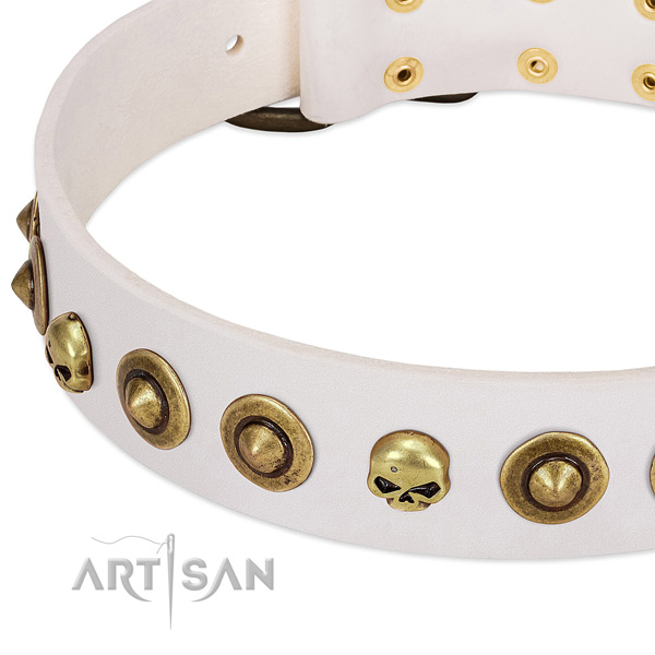 Unique studs on genuine leather collar for your doggie