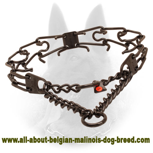Prong collar of rust resistant black stainless steel for ill behaved canines