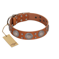 """Far Star"" FDT Artisan Tan Leather Belgian Malinois Collar with Engraved Studs"