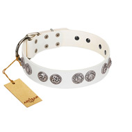 """Eye Candy"" Appealing FDT Artisan White Leather Belgian Malinois Collar with Chrome Plated Medallions"