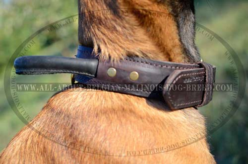 Belgian Malinois 2 Ply Leather Collar Adjustable