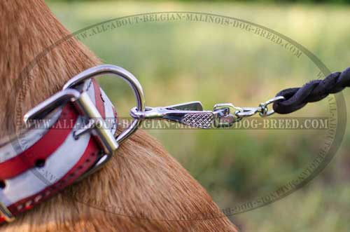 Decorated Belgian Malinois Dog Collar With Durable Rust  And Corrosion Resistant Fittings