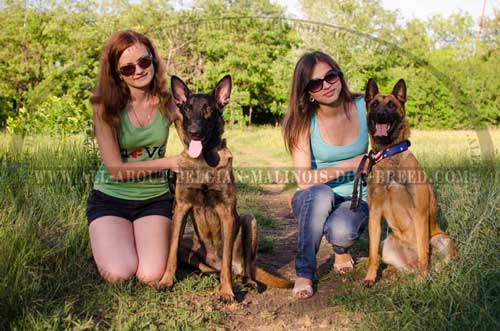 Painted Models Of Leather Dog Collars For Belgian  Malinois