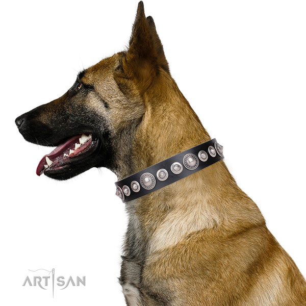 Extraordinary studded genuine leather dog collar for walking