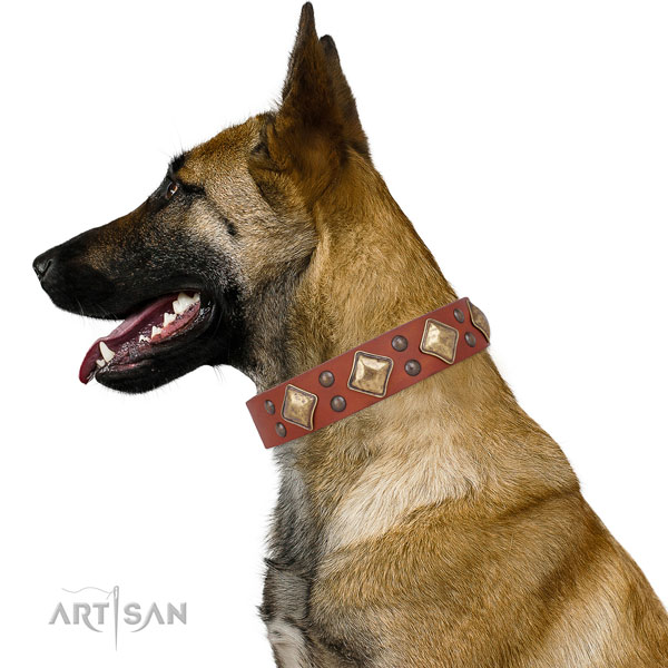 Everyday walking studded dog collar made of reliable natural leather