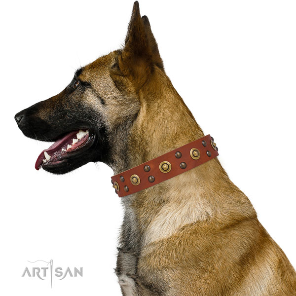 Everyday use dog collar with unique adornments