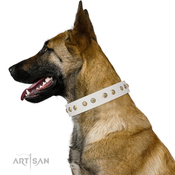 Unusual embellishments on handy use full grain natural leather dog collar