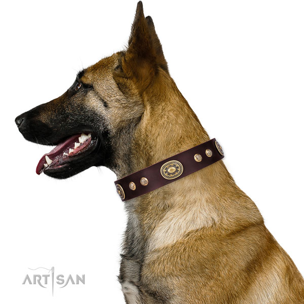 Exceptional decorations on fancy walking dog collar
