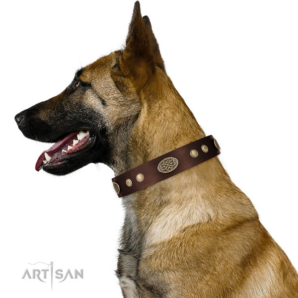Corrosion resistant fittings on full grain natural leather dog collar for fancy walking