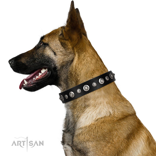 Finest quality full grain genuine leather dog collar with exquisite adornments