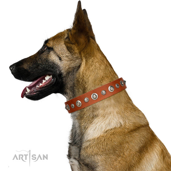 Top notch full grain leather dog collar with extraordinary embellishments
