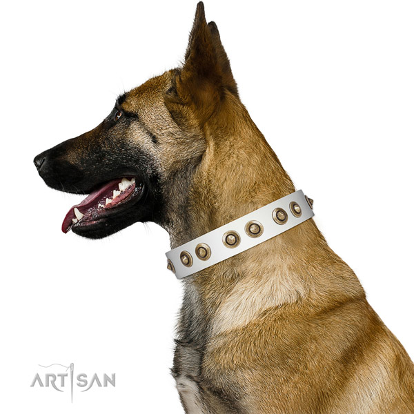 Comfortable wearing dog collar of natural leather with designer embellishments
