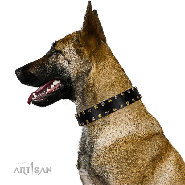 Impressive genuine leather dog collar with corrosion resistant adornments