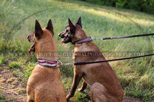 Handcrafted Leather Belgian Malinois Dog Collars For  Everyday Walking