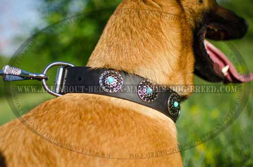 Walking In Style Is Not A Problem With Our Fashionable Dog Collar