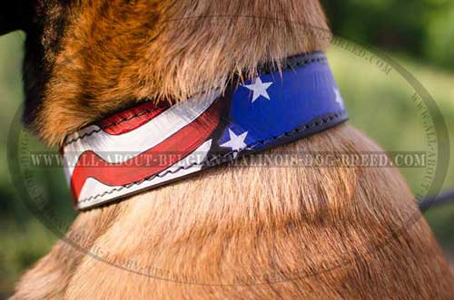 American Pride Leather Belgian Malinois Dog Collar  Equipped With Nickel Hardware