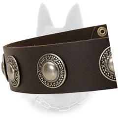 Fashionable Leather Belgian Malinois Dog Collar With  Nickel Fittings