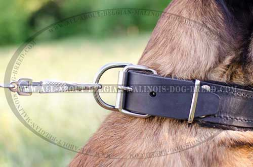 Leather Belgian Malinois Dog Collar Equipped With Durable  Rust Resistant Hardware