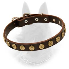 Belgian Malinois Leather Dog Collar Decorated with  Brass Doted Circles