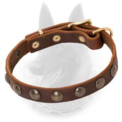 Malinois Studded Leather Dog Collar Decorated with  Brass Half-Ball Studs