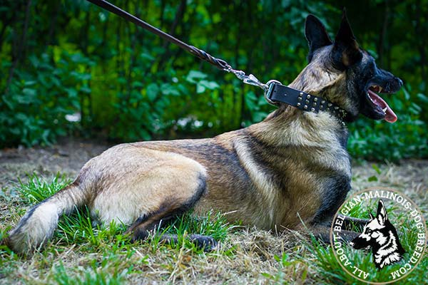 Belgian Malinois collar with attractive decorations