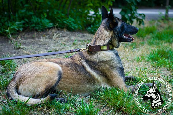 Belgian Malinois collar with strong buckle and D-ring