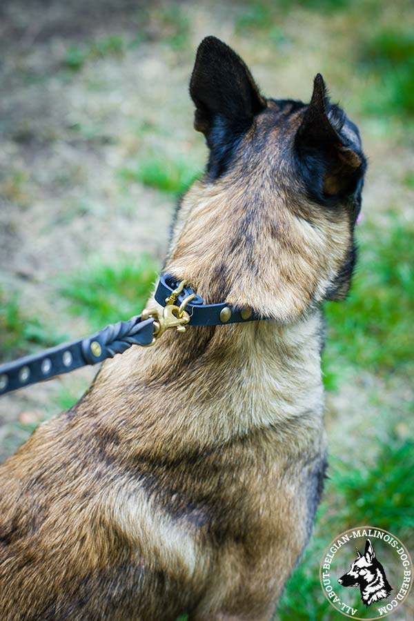 Belgian Malinois collar with durable hardware