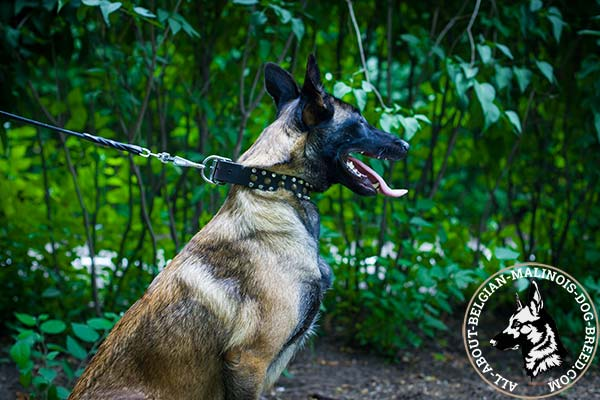 Belgian Malinois leather collar with glamorous decorations