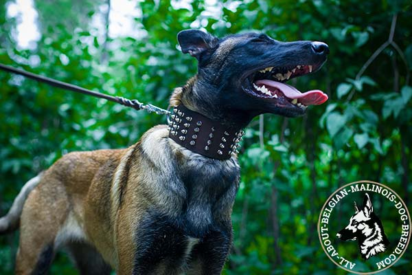 Extra strong Belgian Malinois leather collar