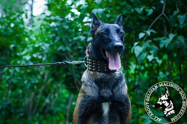 Comfy width Belgian Malinois leather collar
