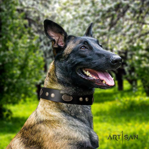 Belgian Malinois handy use leather collar for your beautiful dog