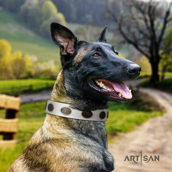 Belgian Malinois stylish walking full grain natural leather collar for your impressive doggie