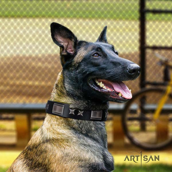 Belgian Malinois comfy wearing natural leather collar for your attractive dog
