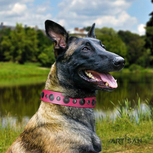 Belgian Malinois basic training full grain genuine leather collar for your handsome pet