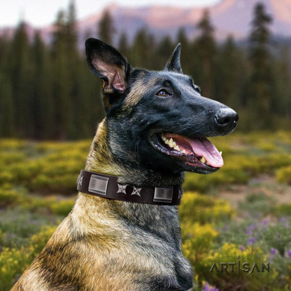 Belgian Malinois comfortable wearing natural leather collar for your stylish pet