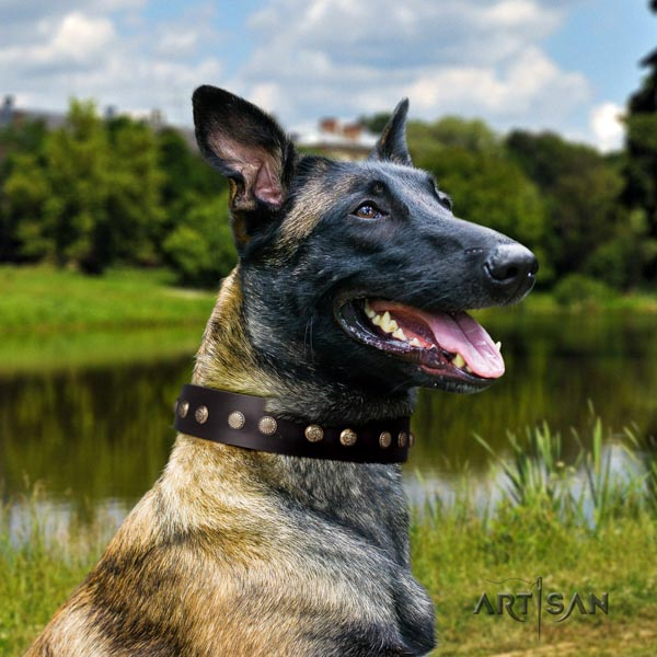 Belgian Malinois everyday use natural leather collar for your attractive four-legged friend