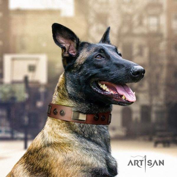 Belgian Malinois everyday use full grain leather collar for your lovely pet