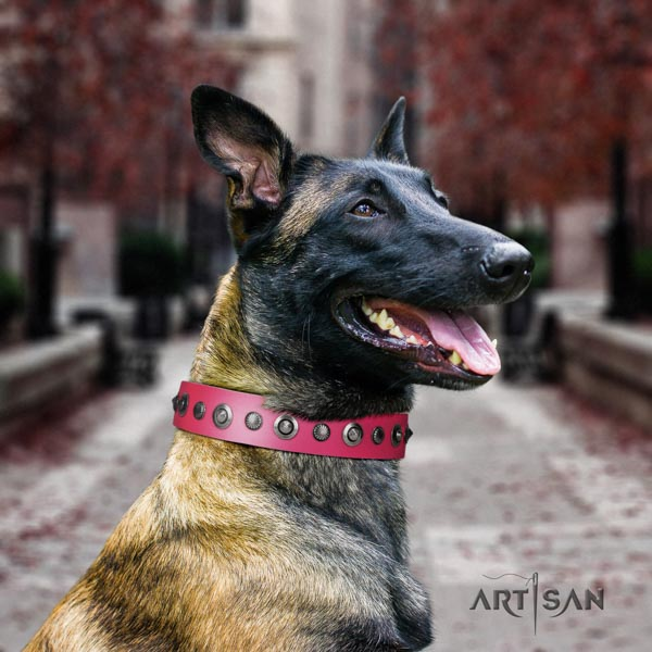 Belgian Malinois everyday use full grain genuine leather collar for your lovely dog