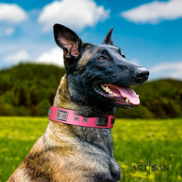Belgian Malinois comfortable wearing leather collar for your beautiful dog