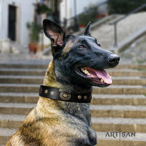 Belgian Malinois fancy walking full grain leather collar for your lovely doggie