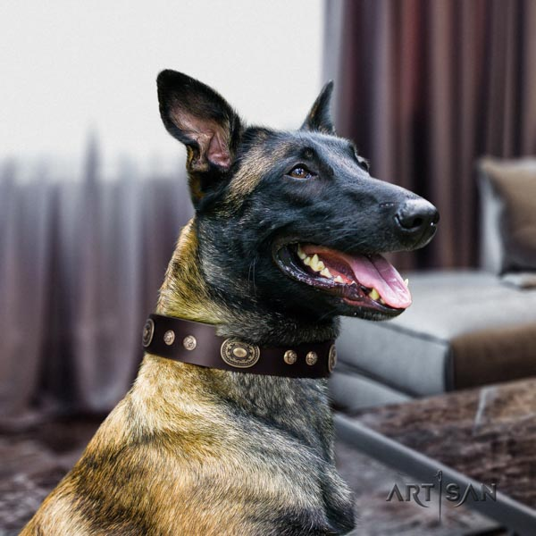 Belgian Malinois daily use full grain leather collar for your beautiful doggie