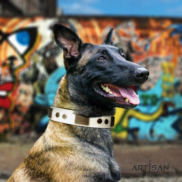Belgian Malinois stylish walking leather collar for your stylish pet