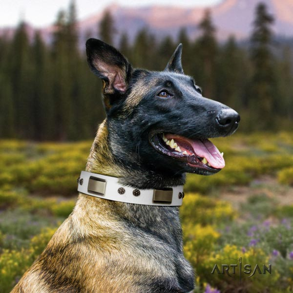 Belgian Malinois daily use genuine leather collar for your lovely dog