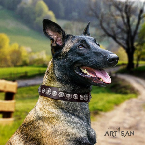 Belgian Malinois daily use full grain leather collar for your impressive doggie